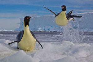 Frozen Moment, Paul Nicklen