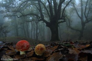 Woodland Magic, Andres Miguel